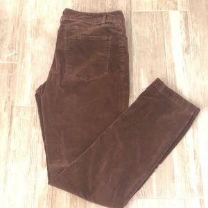 Coldwater Creek Brown Velvet City Riding Pants